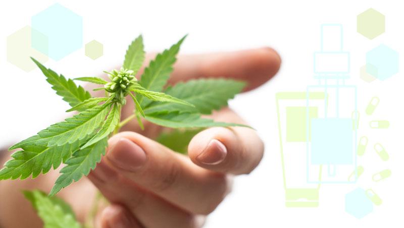 Cannabis - Belleza