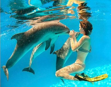 Dieta del delf�n.