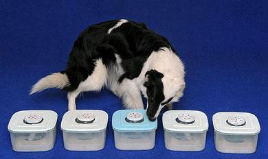 Perros que detectan el c�ncer.