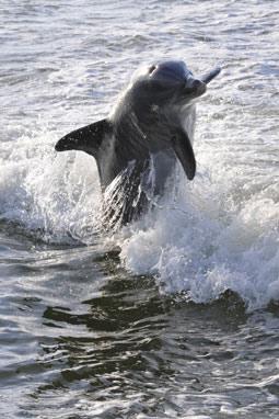 Un estudio confirma rastros de parabenos en delfines y osos polares