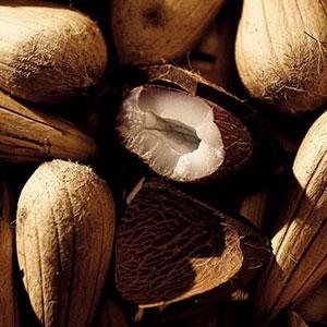 Las semillas murumuru protegen la selva amazónica
