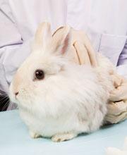 Taiwán está a un paso de prohibir testar cosméticos con animales