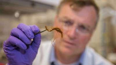 El cabello, posible alternativa al ADN en investigaciones policiales