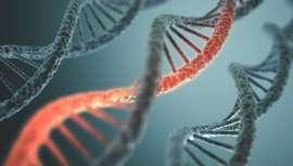 Se efectuarán conferencias sobre estrategias para el rejuvenecimiento de las células y la regeneración de tejidos