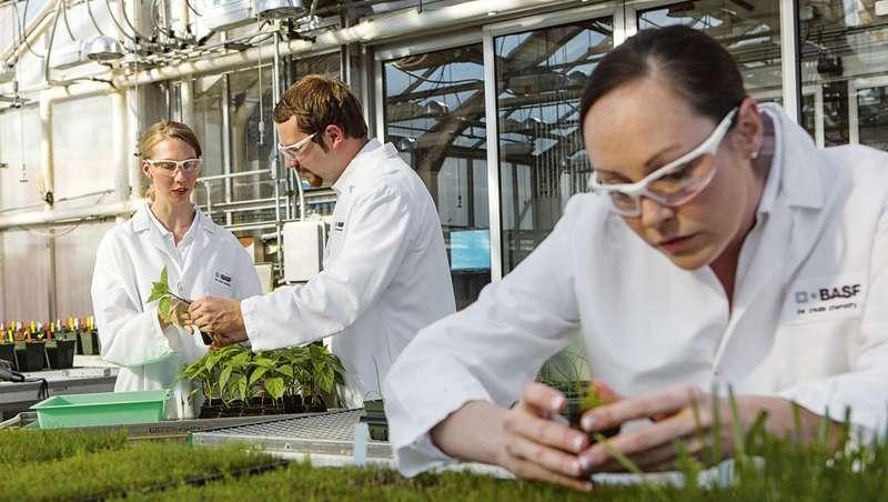 BASF presenta en Cosmetagora sus nuevas rutinas de belleza, ingredientes activos y microproteínas