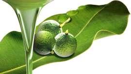 Incorporado a la cosmética, este aceite tiene diversos usos para la piel y ofrece muchos beneficios al ser antioxidante y antiaging