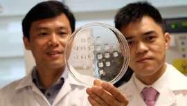 Este revolucionario método, destinado a reducir la grasa de la barriga, ha demostrado ser muy prometedor en ensayos de laboratorio