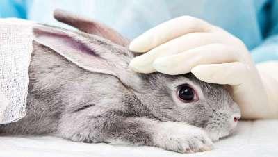 La prohibición mundial de la experimentación cosmética en animales, cada vez más cerca
