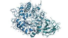La enfermedad de Fabry es una alteración genética hereditaria causada por mutaciones en el gen alfa-galactosidasa A (GLA)