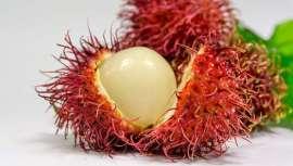Alimentos de moda que están creando tendencia en el mundo de la nutrición, con grandes propiedades y sabores sorprendentes a tener en cuenta en la consulta de cualquier experto del sector