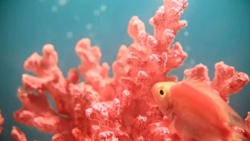 Living Coral - Cor Pantone 2019