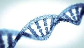 La ayuda de un genetista es clave para establecer las ventajas y limitaciones de un test genético y pueda ayudar en la interpretación de los resultados, algo fundamental para evitar riesgos para la salud