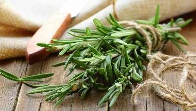 Cinco ingredientes naturales que tu pelo debería conocer