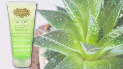 Descubre los usos del aloe vera orgánico