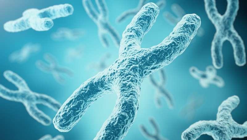 Telómeros, el dorado de la juventud eterna