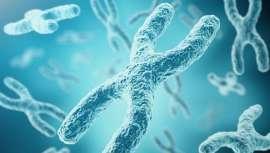 Considerados los biomarcadores del envejecimiento, potenciar la enzima telomerasa es una de las tendencias de la medicina estética de la nueva década