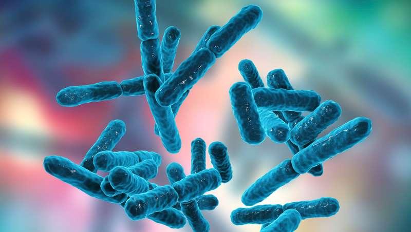 Curso 'Microbiota, probióticos y prebióticos en la salud', organizado por SEMAL