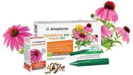 Echinacea, perfecta para aumentar las defensas