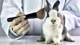 El mundo al revés, o más bien China, quien impide importar productos cosméticos a aquel país sin realizar pruebas en animales. Cruelty Free International instala un programa piloto para revertir la situación