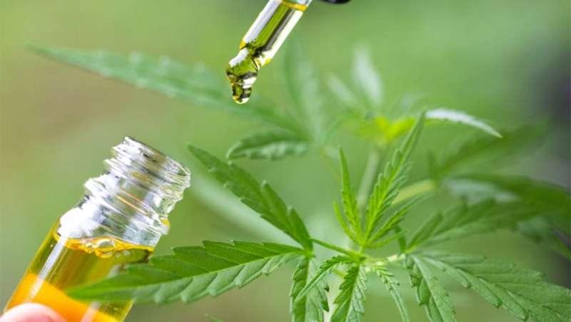 CBD, el uso de cannabis no ha hecho más que empezar en la industria cosmética