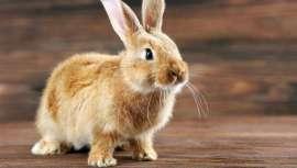 Investigadores desarrollan una nueva herramienta de cribado precisa para los productos clínicos de la piel que utiliza gusanos en lugar de conejos