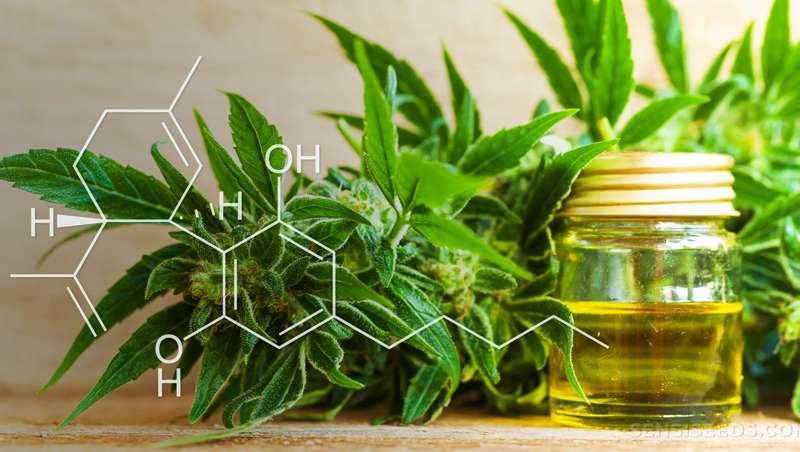 O canabidiol, imparável, encontra novas e superpoderosas moléculas antioxidantes