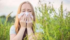Un estudio de la Agencia de la Seguridad en la Salud en Francia (ANSES) informa acerca del coste de la alergia a la ambrosía que prolifera en el territorio, lo que se une a los efectos de la pandemia en una factura millonaria