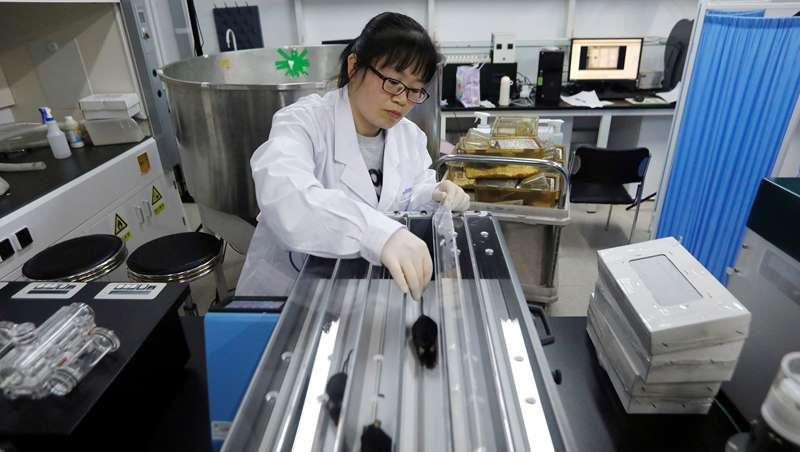 Científicos chinos desarrollan una terapia génica que retrasa el envejecimiento