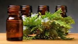 Aceite esencial de ciprés, ¡purifícate!