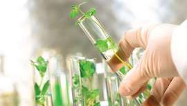Arkopharma Laboratorios se decide por los principios de la galénica verde para la elaboración y fabricación de sus productos farmacéuticos de origen 100% natural, siguiendo el principio de la galénica verde
