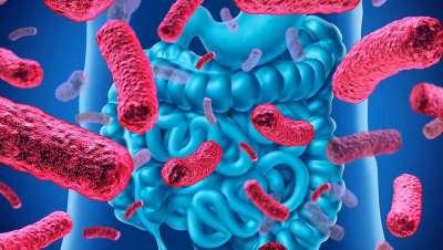 El papel de la microbiota intestinal en las enfermedades inflamatorias de la piel