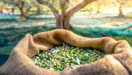 Sophim, fabricante de ingredientes cosméticos, nos presenta Phytosqualan®, un emoliente 100% de escualeno de oliva