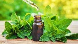 Porque su olor trasciende, empata y eleva el espíritu, el cuerpo y la mente, aparte de mil cosas más... El aceite esencial de menta es uno de los bienes más preciados de la salud y la belleza