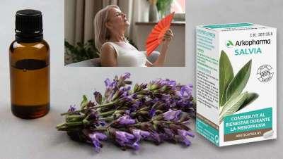 Salvia, la aliada contra los sofocos y la sudación de la menopausia