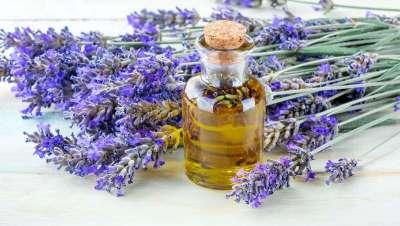El uso milenario del aceite esencial de lavanda en medicina y aromas