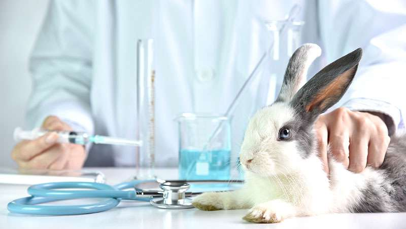 México - Experimentación con animales