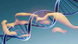 Conocer los genes personales permite elaborar una dieta personalizada