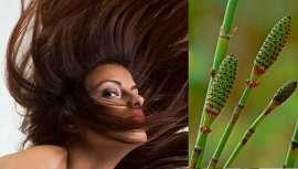 Entre sus múltiples propiedades terapéuticas, la Equisetum Arvense favorece el crecimiento del cabello y las uñas, que se vuelven más fuertes y de mejor calidad. Pero tiene otros muchos usos no menos importantes...