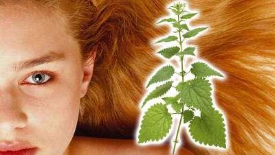 La ortiga y sus beneficios para el cabello