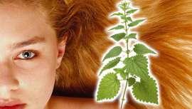 Esta planta posee muchas y variadas propiedades, siendo además una fuente importante de vitaminas y minerales. Los productos capilares basados en la ortiga previenen la caída del cabello, fortaleciéndolo y regulando el exceso de sebo