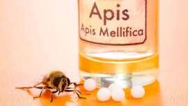 Tras la baba de caracol, la placenta de tortuga o el cianuro de serpiente, llega el turno del veneno de abeja