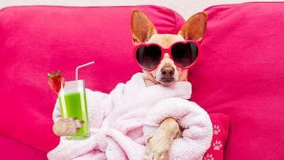 Perros VIP en Nueva York, nueva tendencia