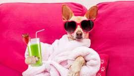 Los caninos van por las calles con diseños carísimos, se alojan en hoteles muy elegantes y hasta pueden llegar a pasar por una cirugía estética.