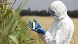 Más del 67% de los ensayos experimentales se llevan a cabo en los campos de nuestro país. Así se desprende del mapa elaborado por Greenpeace, con la intención de aproximarse a un registro público de cultivos transgénicos