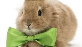 Aunque parezca una excentricidad, el primer spa del mundo para conejos llegará a la capital británica muy pronto, de mano de la marca de cosméticos vegetales 7th Heaven