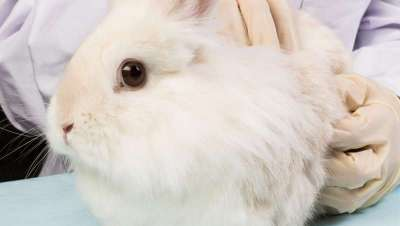 Taiw�n est� a un paso de prohibir testar cosm�ticos con animales